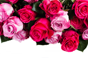rosees-bunch-istock_000056732340medium